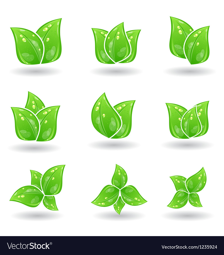 Set of green eco leaves isolated on white vector