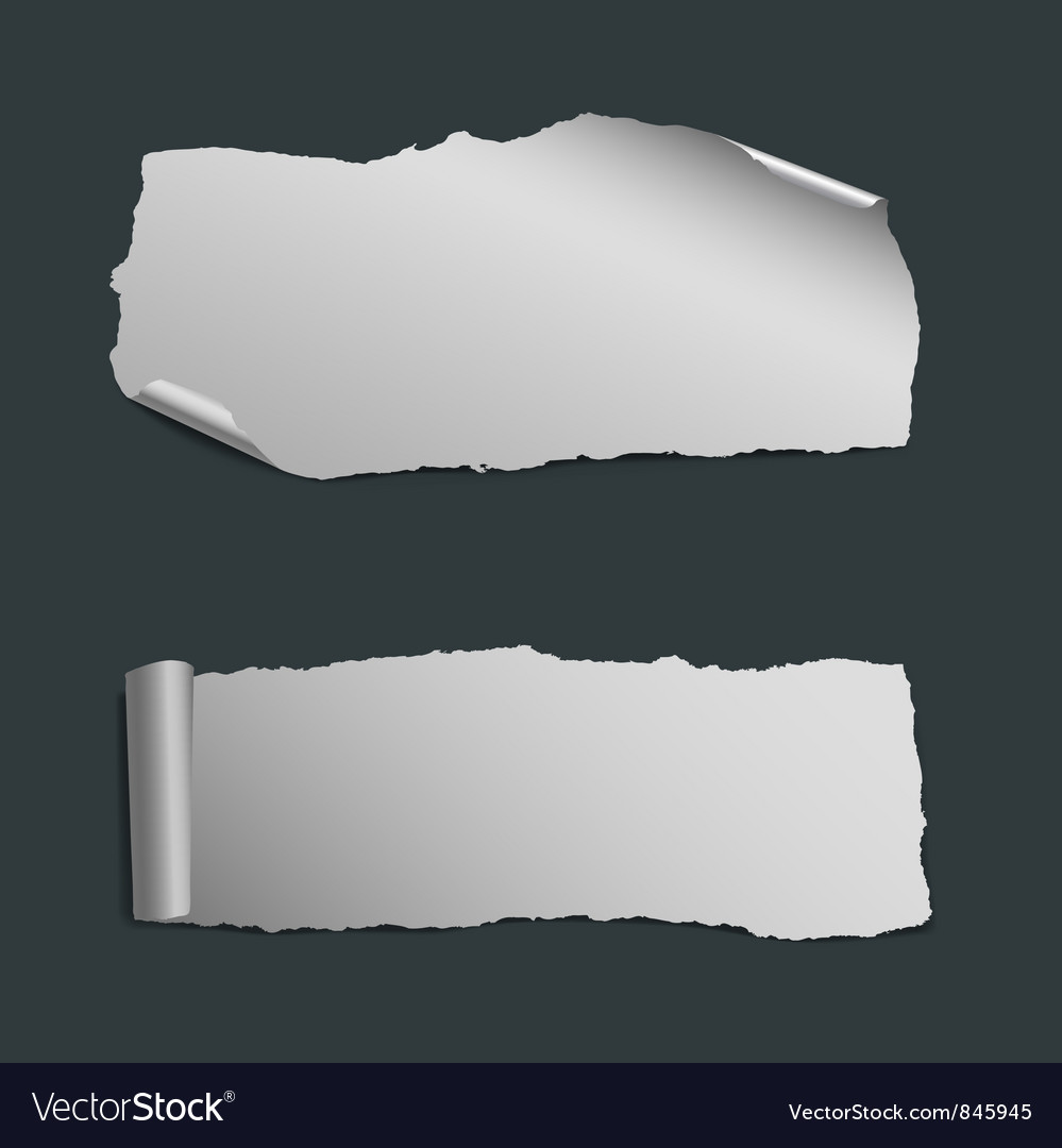 Collection of white ripped paper pieces vector