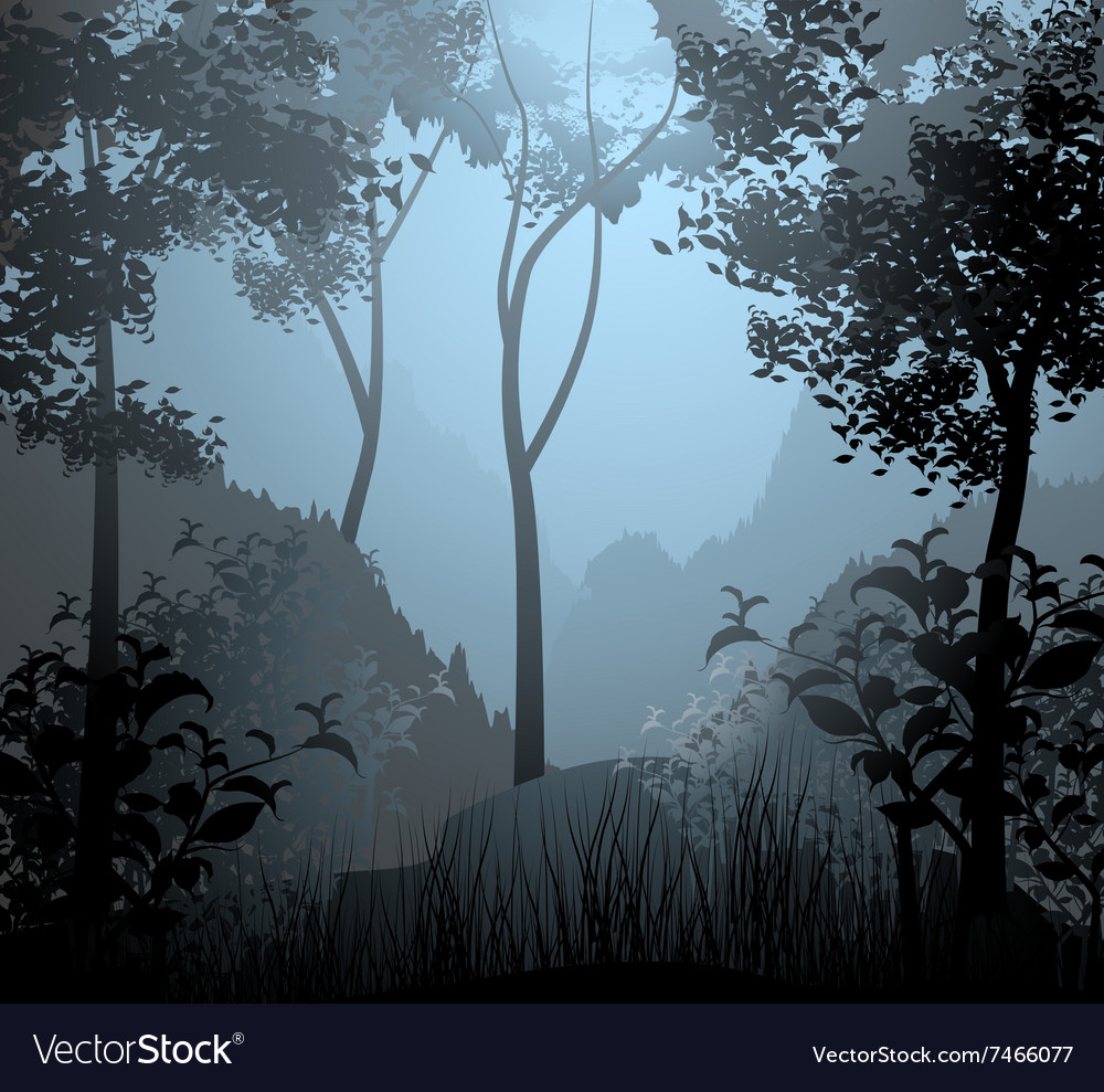 Cloud forest scene