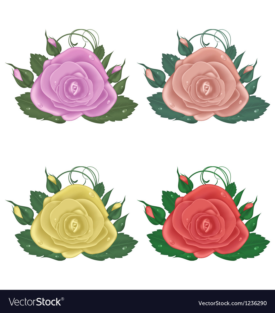 Closeup set of roses isolated on white background vector