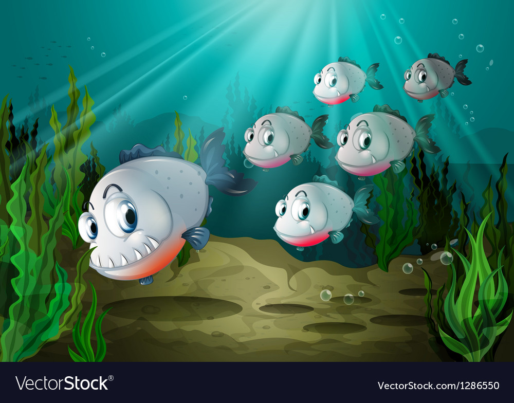 Six fishes with big fangs under the sea vector
