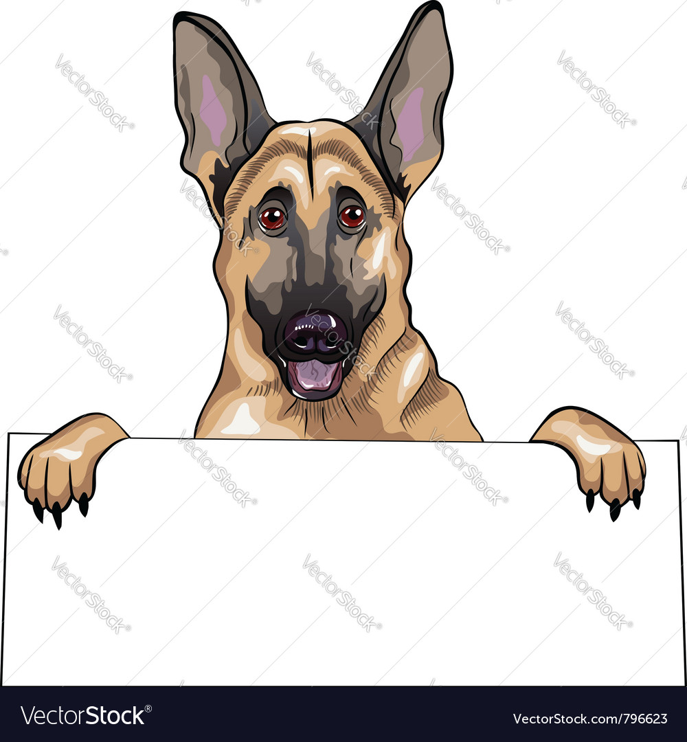 Portrait of german shepherd vector