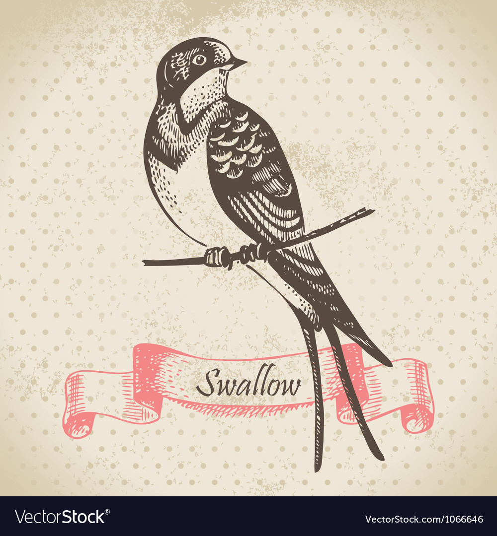 Swallow bird handdrawn vector