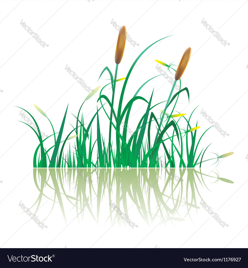 Closeup of sugar cane plantation vector