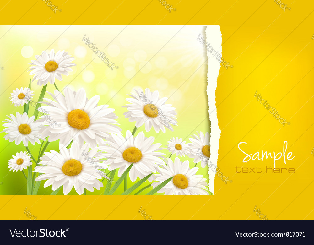 Nature background with fresh daisy vector