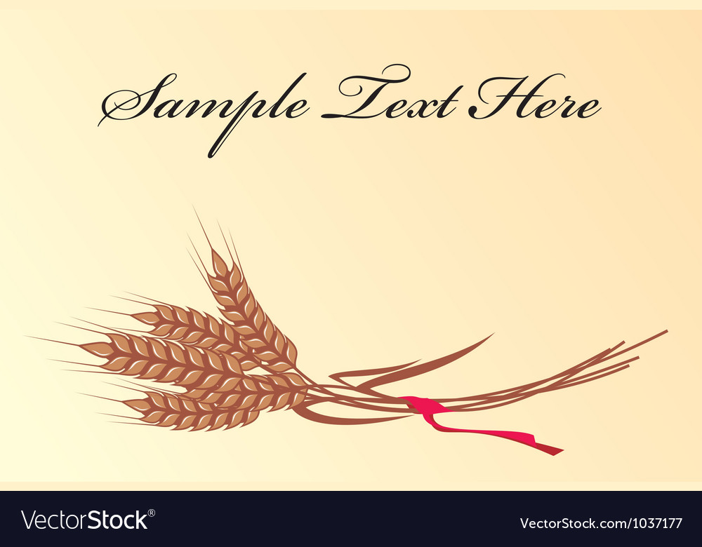 Wheat background vector