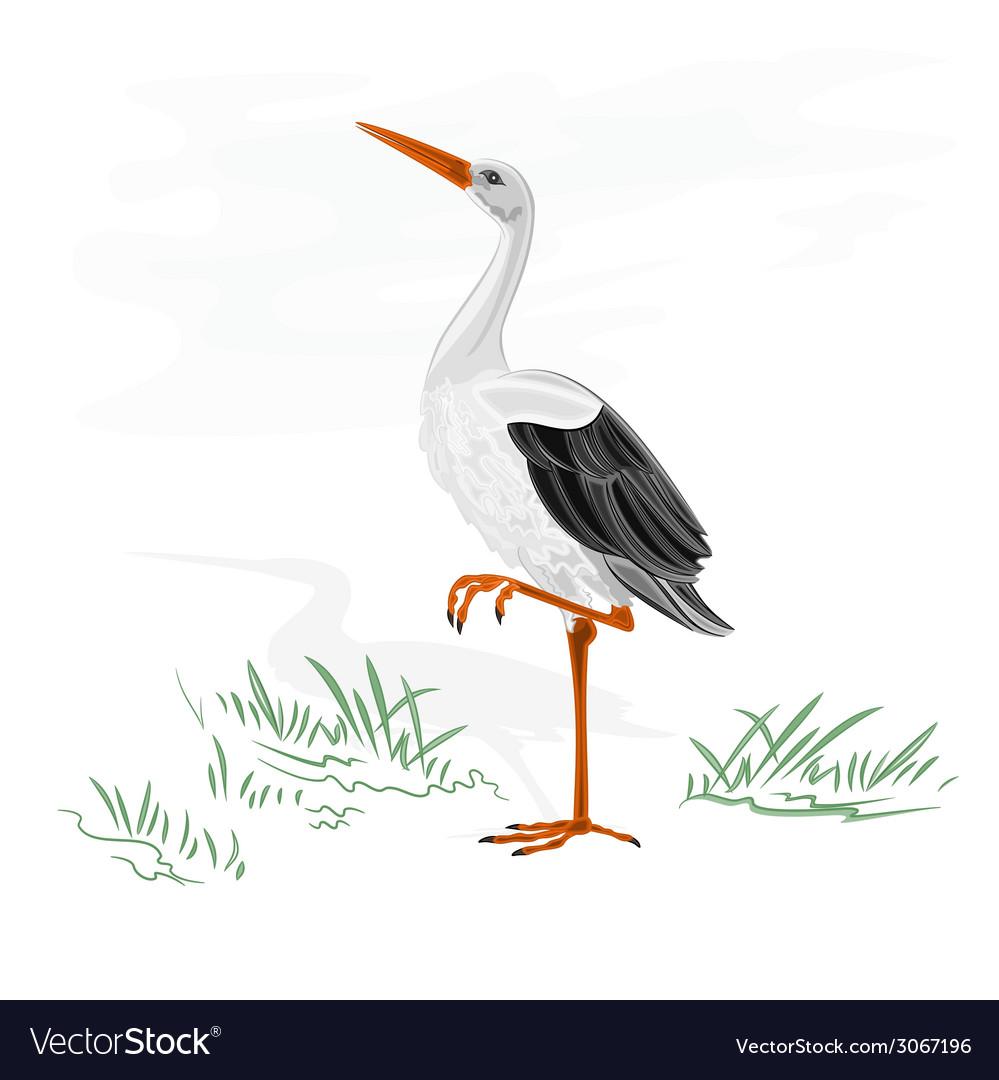 Stork white wild water bird