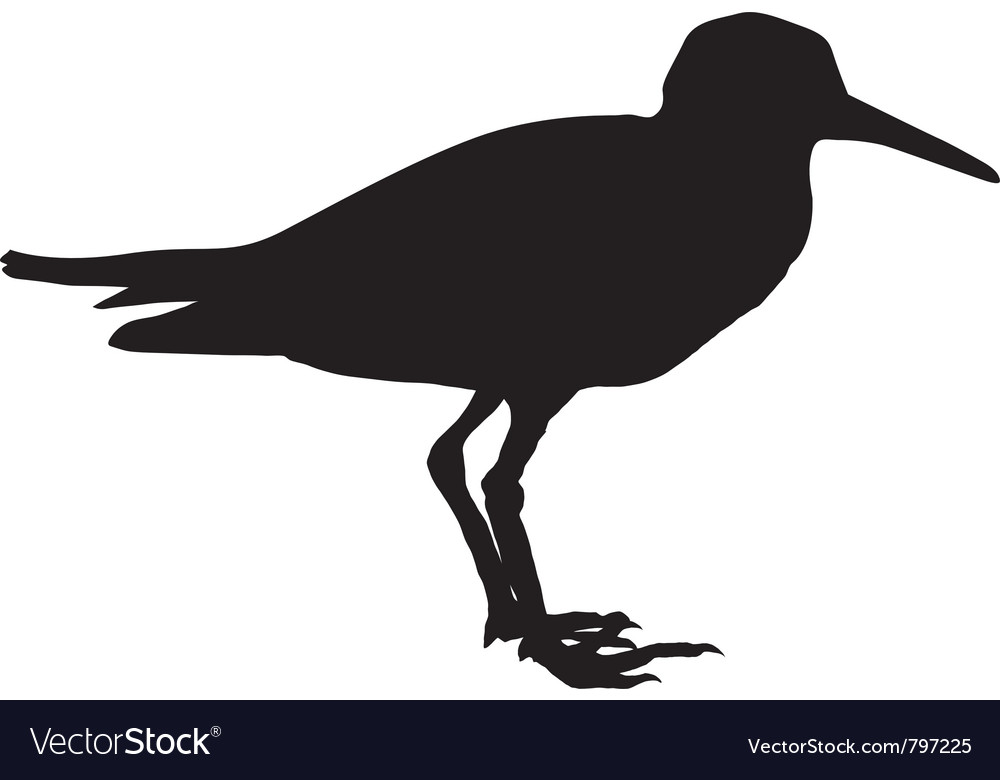 Silhouette of sandpiper vector