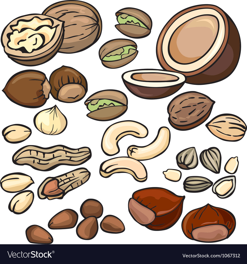 Nuts seeds icon set vector