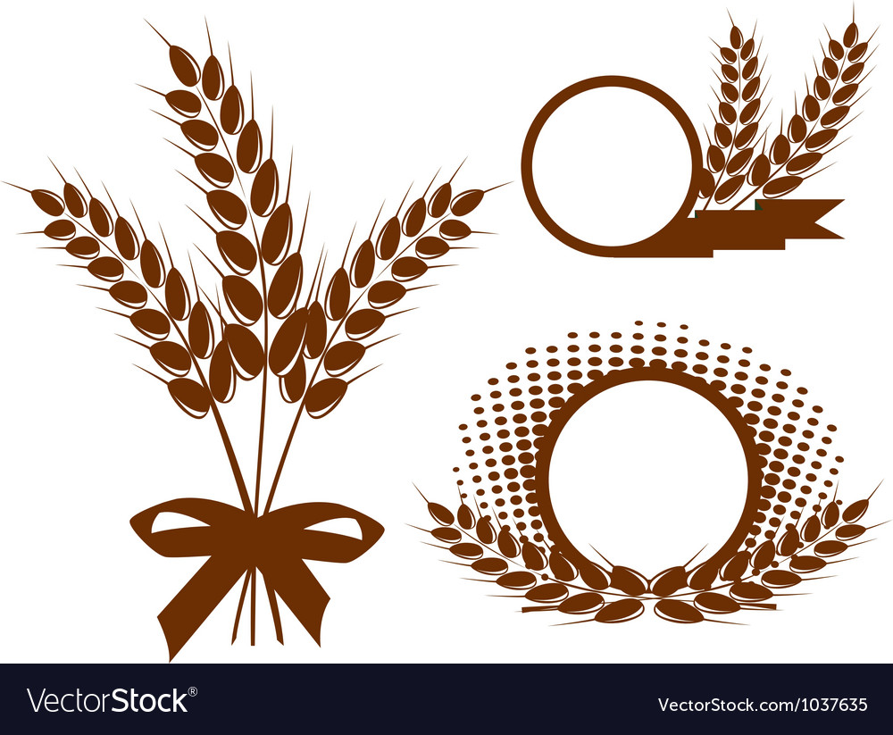 Set with ears of wheat vector