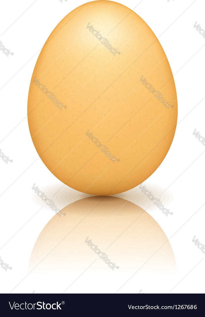 Brown egg with reflection vector