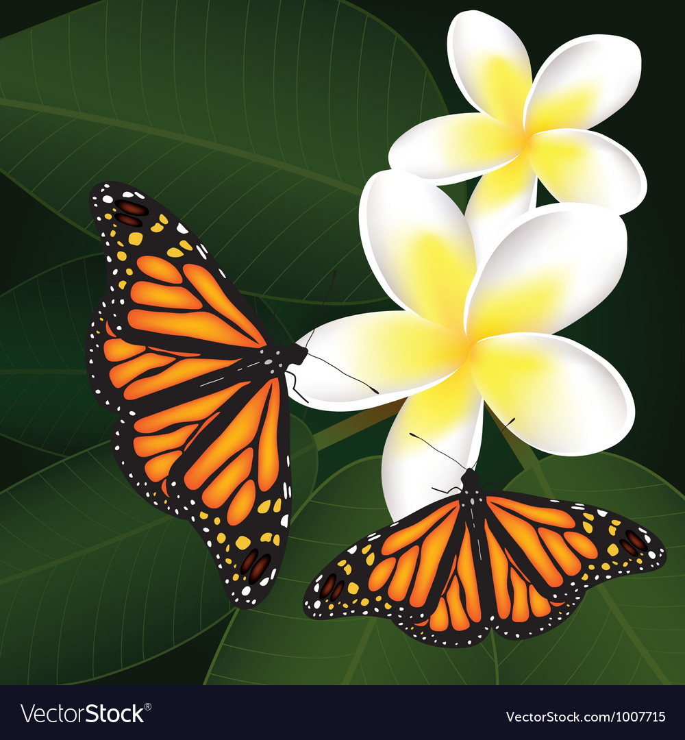 Frangipani and butterflies vector