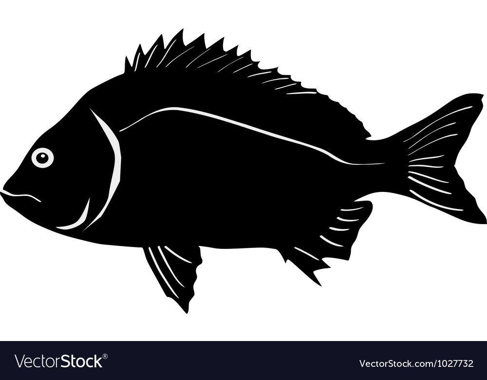Silhouette of bream vector