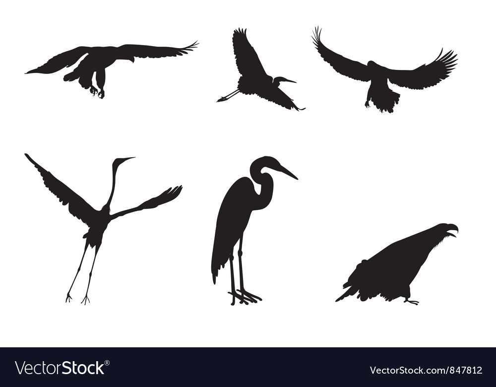 Eagle and the stork vector
