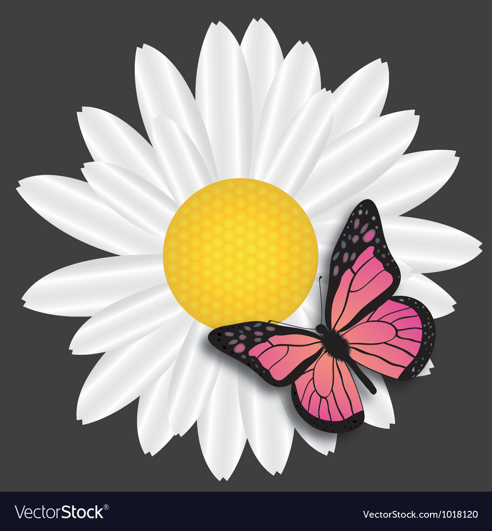 Butterflu on daisy on blue background vector
