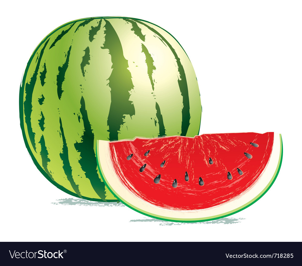 Tasty fresh watermelon vector
