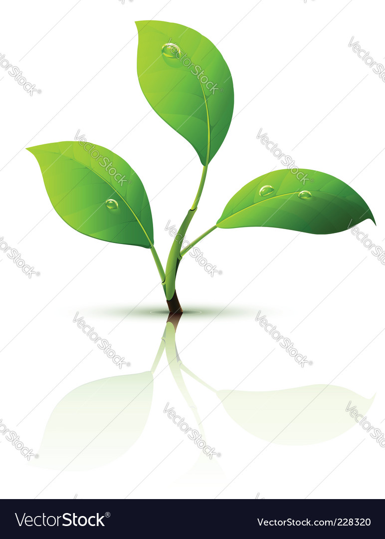 Green leaves vector by LoopAll - Image #228320 - VectorStock