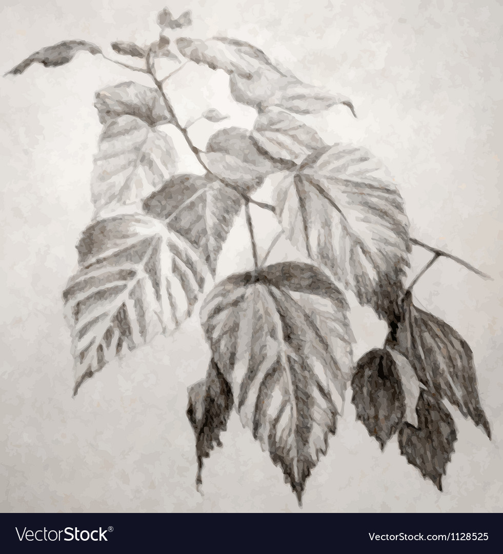 Leaves branch vector