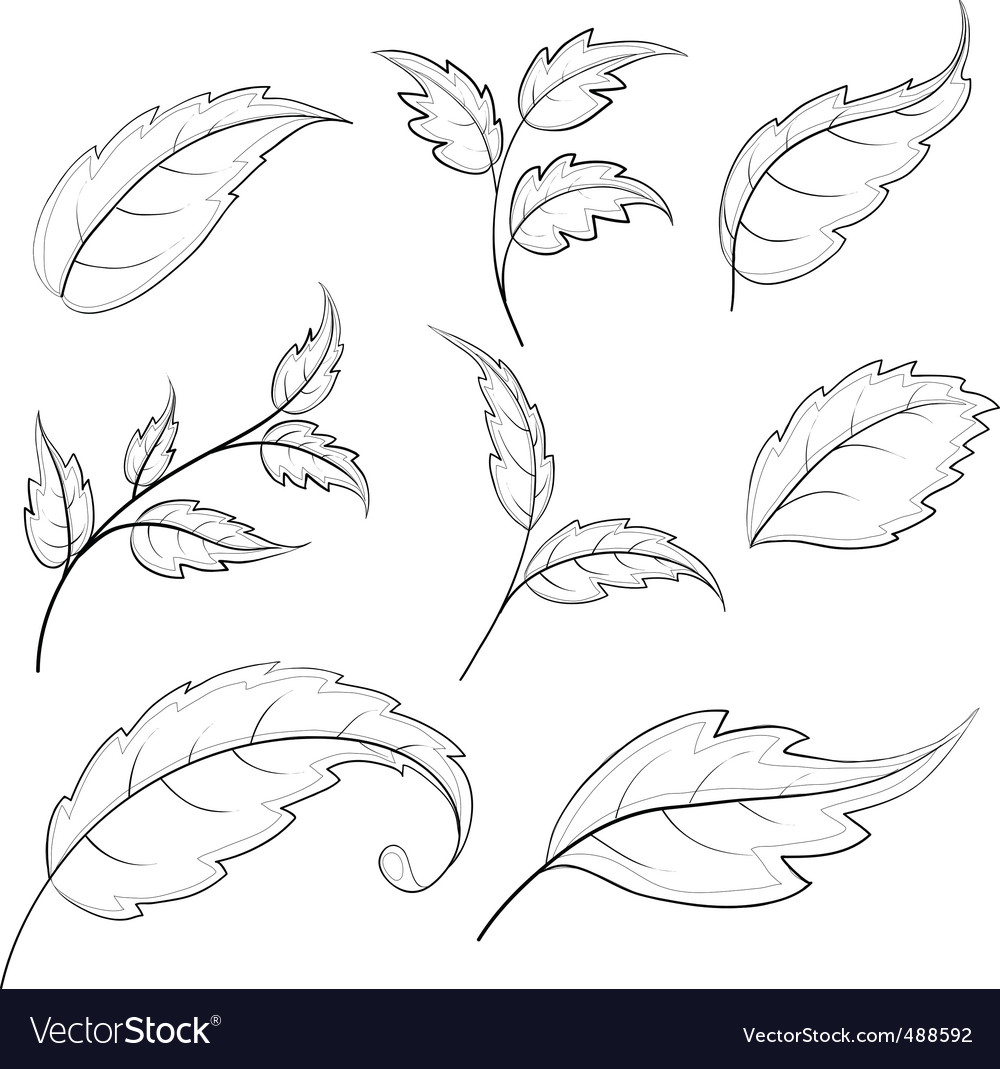 Leaves contours vector