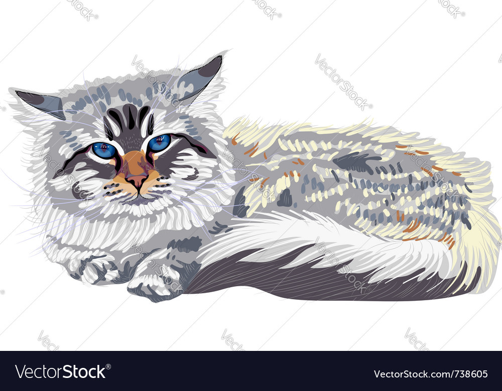 Cat breed siberian cat vector
