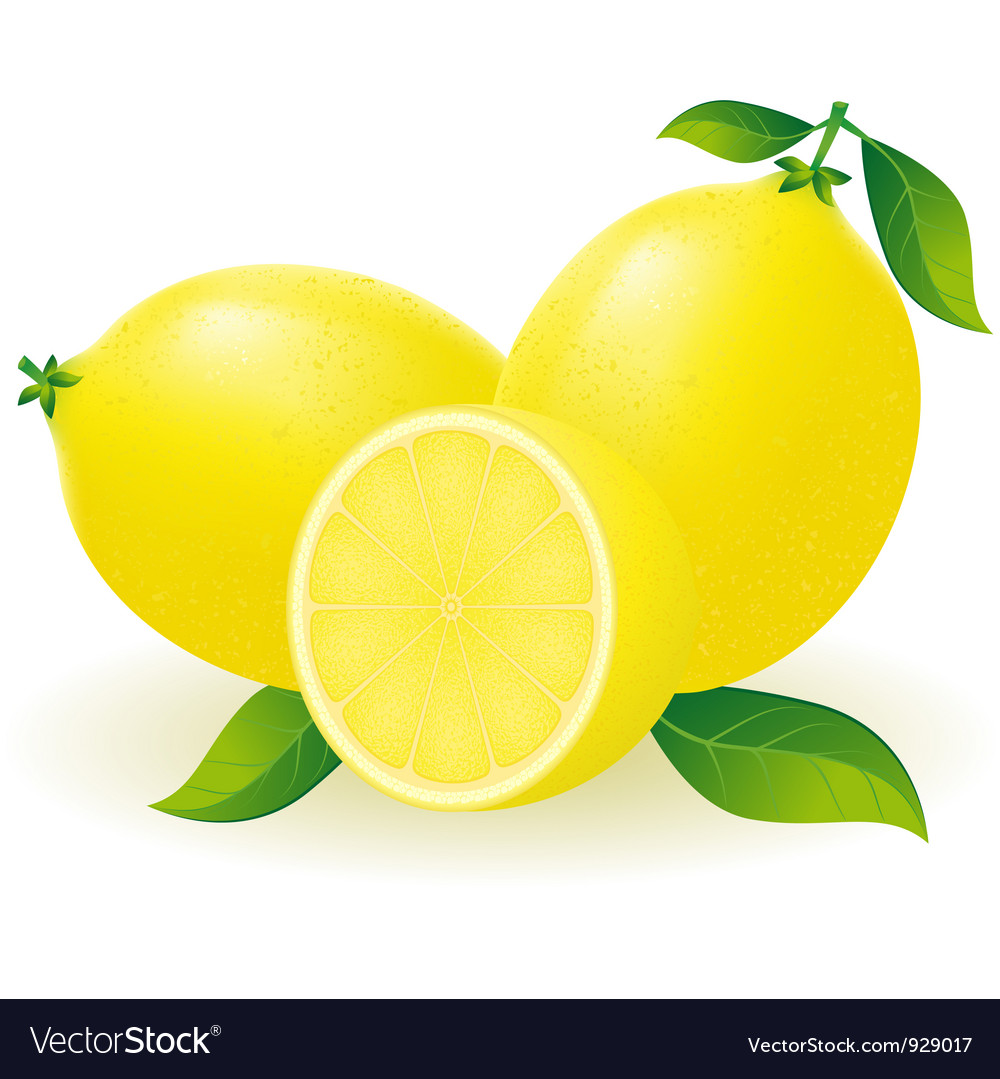 Lemon free vector by kontur vid free download 929017 vectorstock