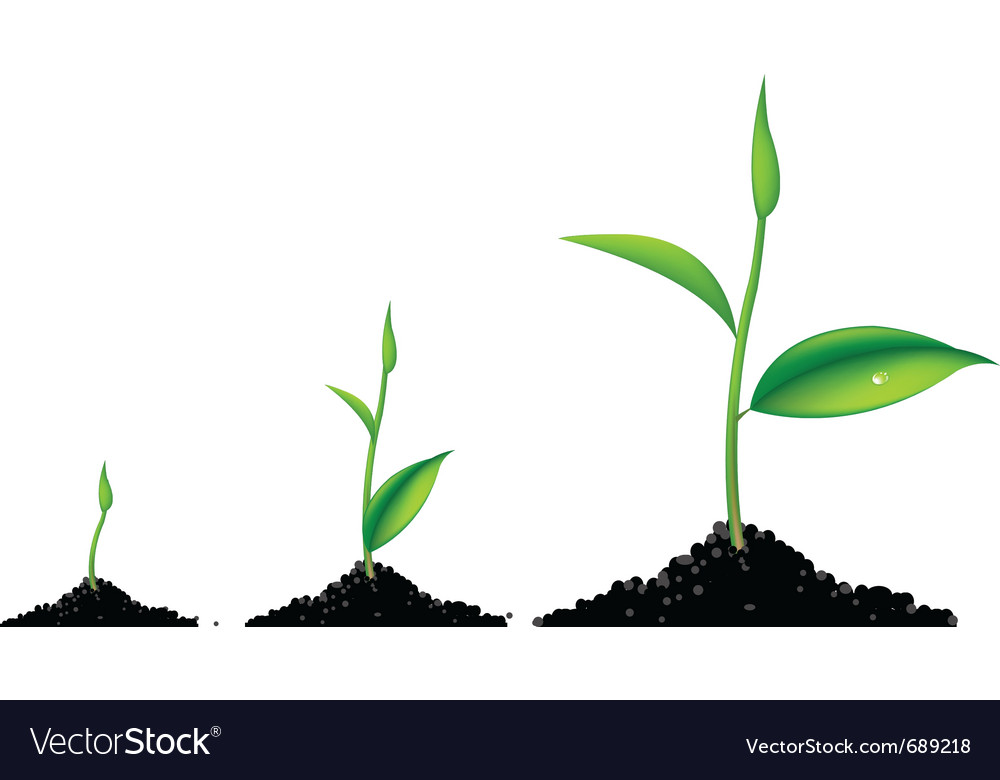 3 sprouts vector