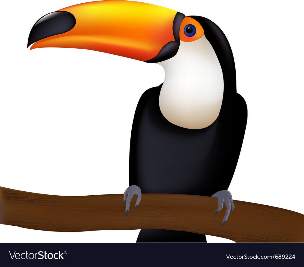 Toucan cartoon vector