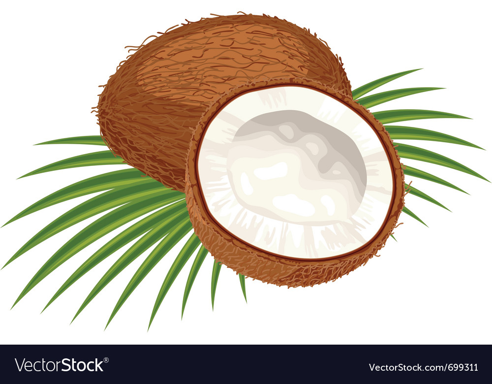 Coconut leaves vector