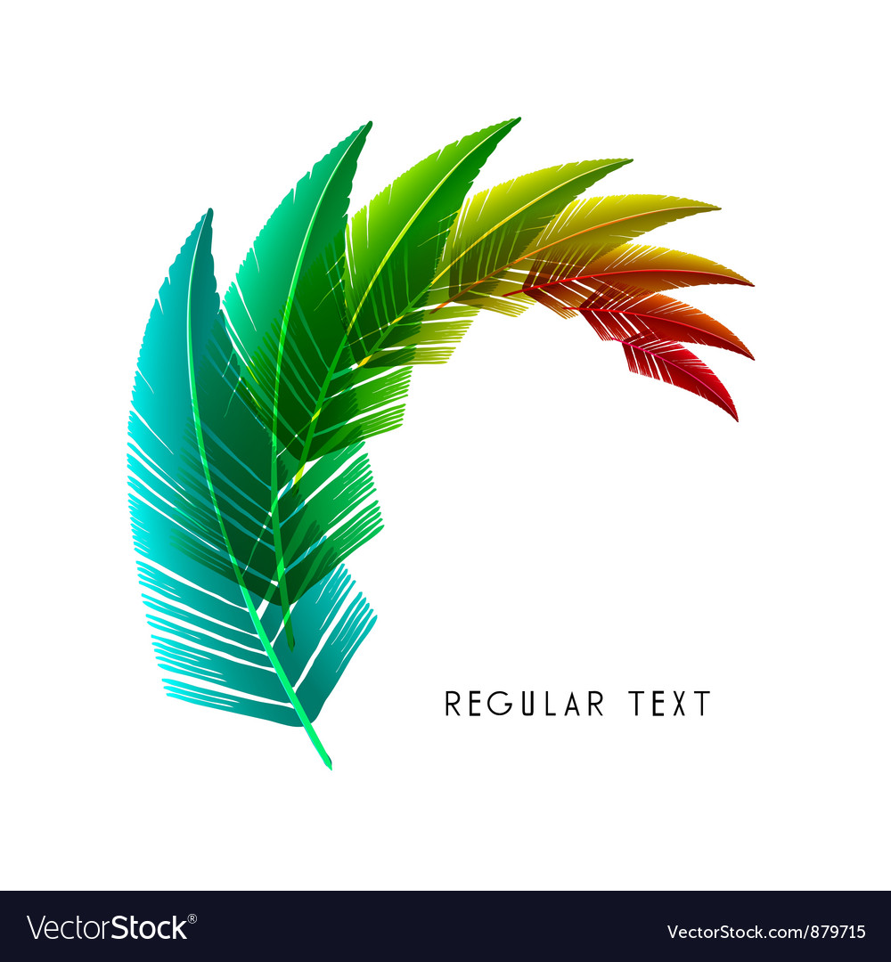 Feather design vector