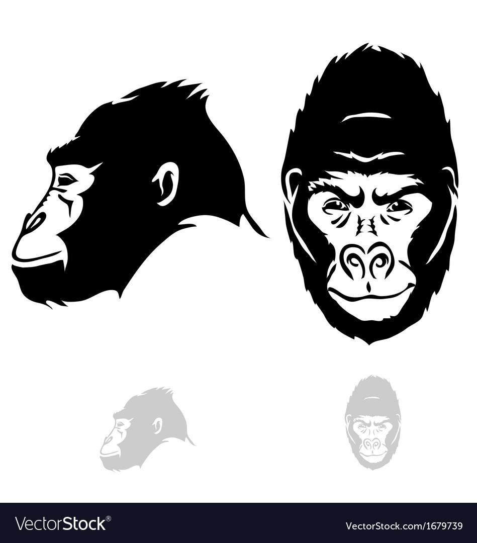 Gorilla vector head - photo#17
