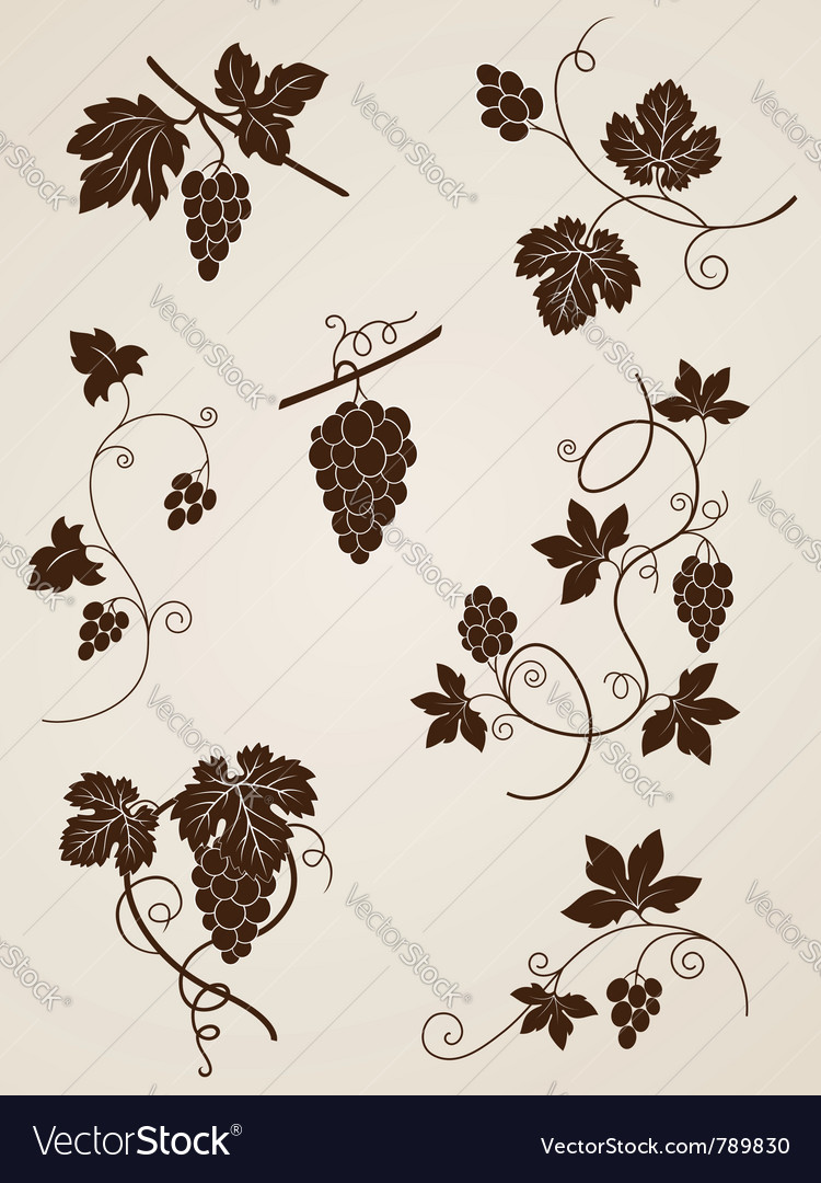 Decorative grape vine elements vector