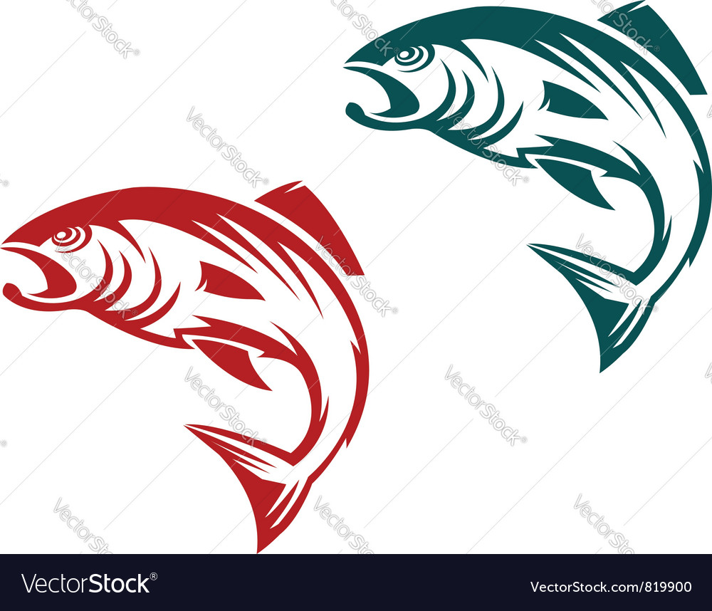 Salmon fish icon vector