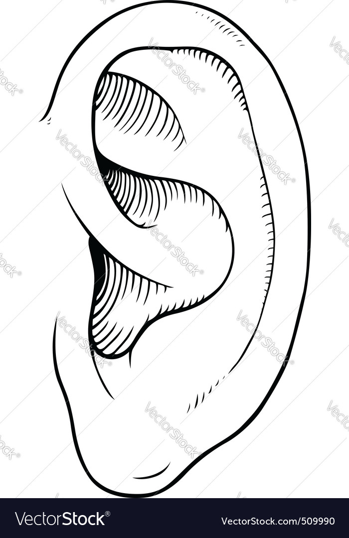 Human ears clipart black and white - photo#9
