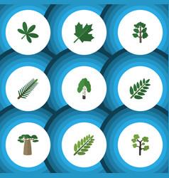 Flat icon nature set of leaves acacia leaf vector