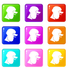 Poodle dog icons 9 set vector