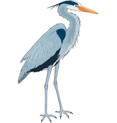 Tg00312p great blue heron vector