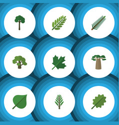 Flat icon bio set of spruce leaves oaken hickory vector