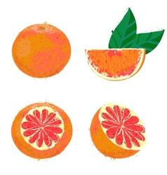 Grapefruit fruits vector