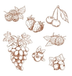 Fruits and berries sketch set vector