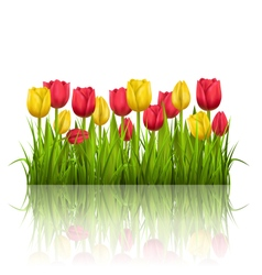 Grass lawn with yellow and red tulips and vector