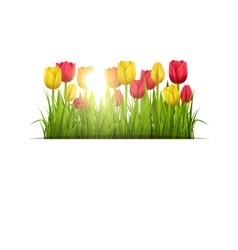 Green grass lawn with tulips and sunlight isolated vector