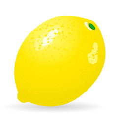 lemon isolated vector image vector image