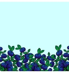 Blue berry bush blueberries vector