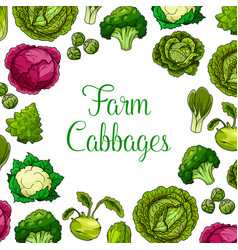 cabbage leafy vegetables poster vector image