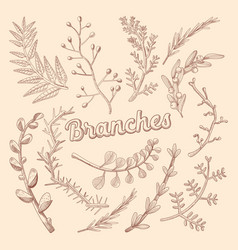 Branches hand drawn floral doodle rustic plants vector
