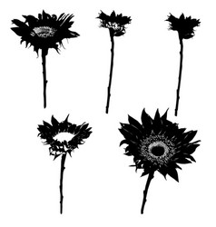 sunflower silhouettes series vector image