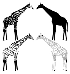 Giraffe silhouettes collection vector image