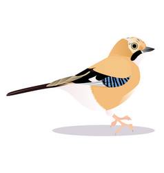 Jay bird vector
