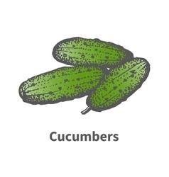 Hand-drawn green mature big cucumbers vector