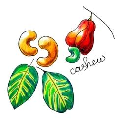 Cashew vector